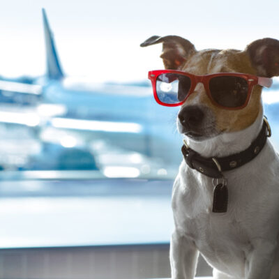 The Cheapest And Safest Way To Transport Your Pets Across Country